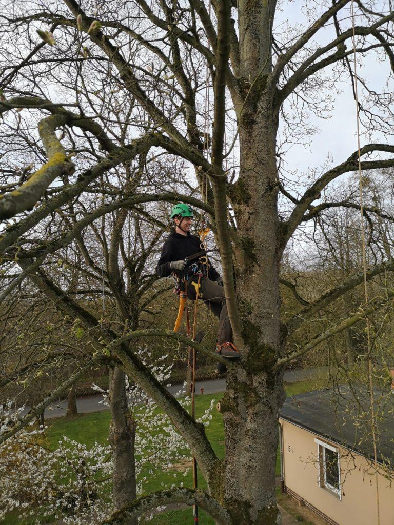 Baumkletterer im Baum